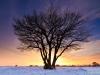 Eenzame boom in tegenlicht